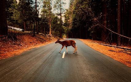 post-deer